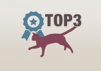 TOP 3 Katzenklappen