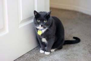 Installation der Katzenklappe